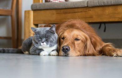 cane-in-casa-con-gatto-sul-pavimento