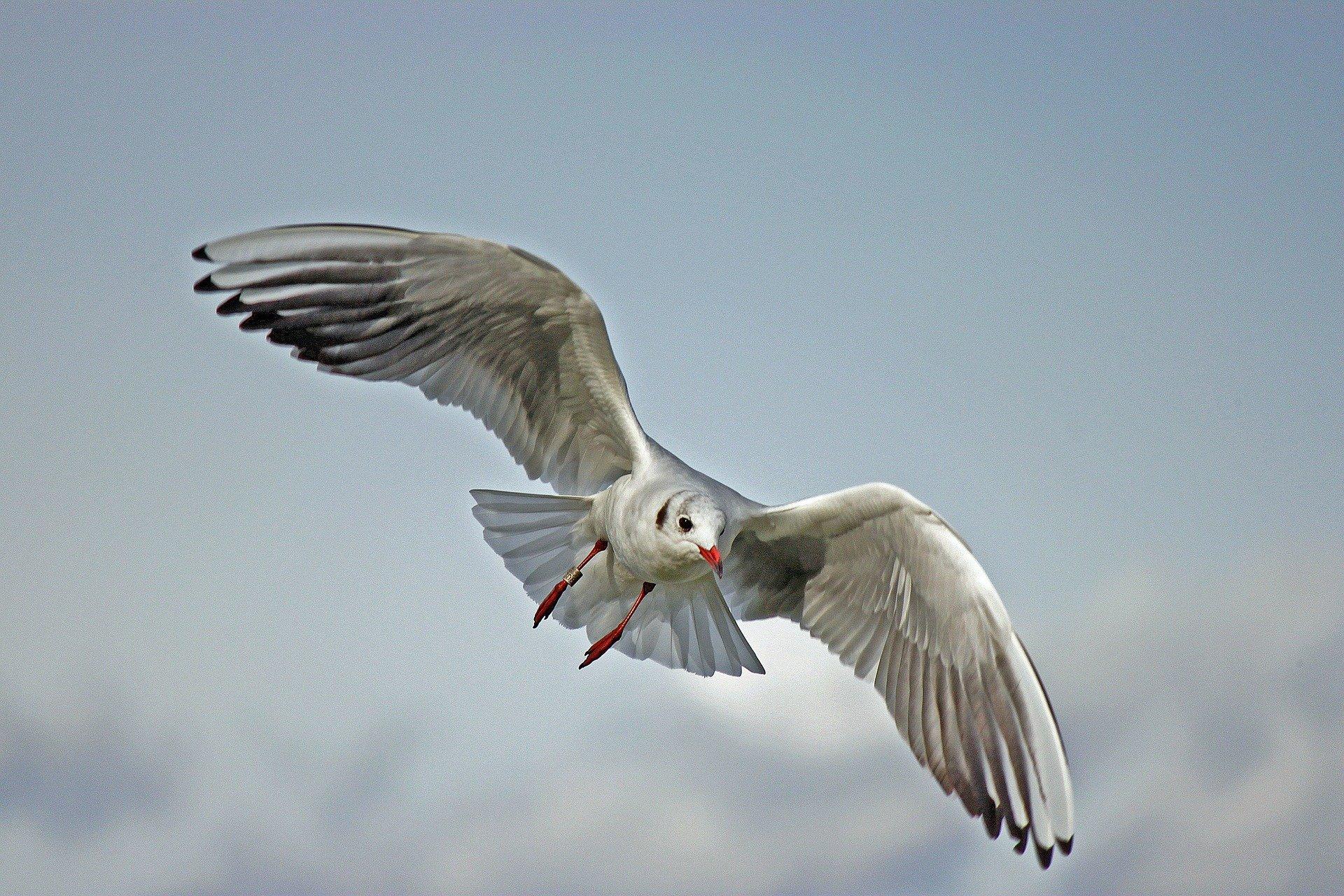 6 seagull-79658_1920